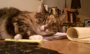 Cats Ignoring Dogs Friendship