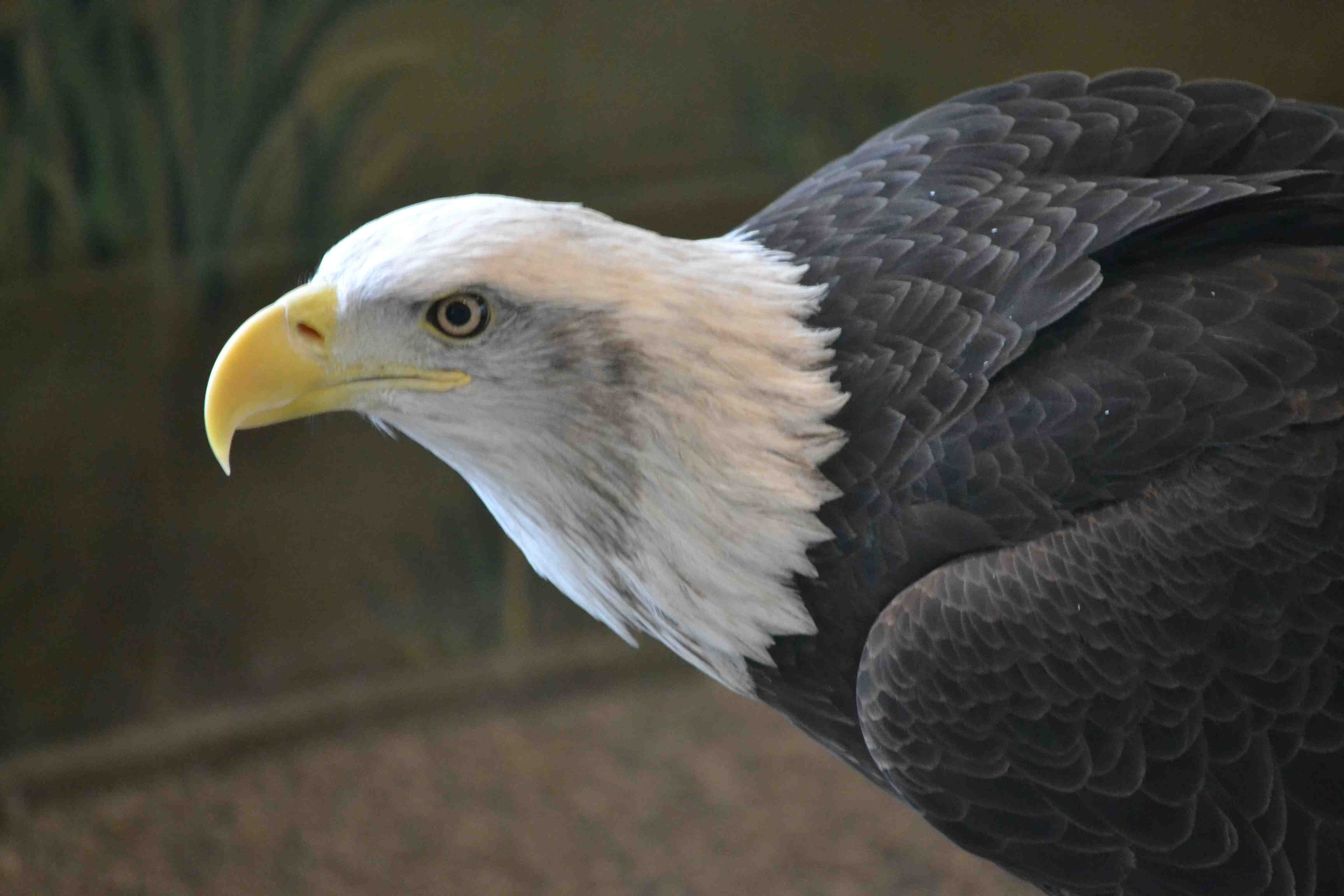 ... Eagle Center gives him a home and helps people learn about eagles